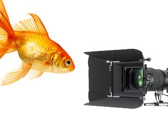 GO FISH FILMS